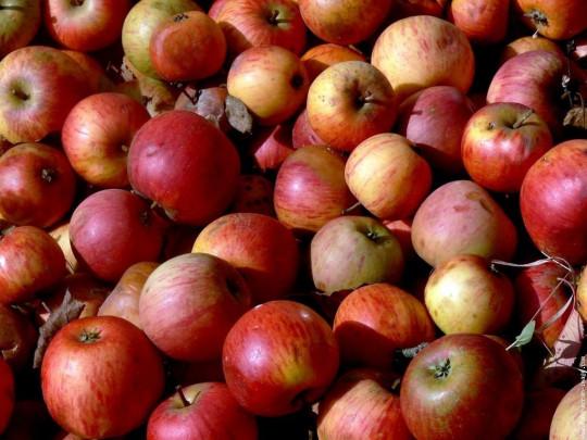 Vin de pommes